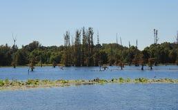 Lago alla riserva nazionale di Hatchie, Haywood, Tennessee fotografia stock