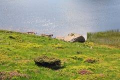 Lago alpestre Nesamovyte en las montañas del verano fotografía de archivo