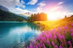Lago alpino bonito Imagem de Stock
