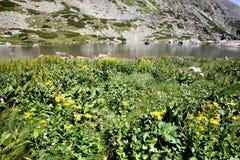 Lago alpino della montagna di estate Immagine Stock