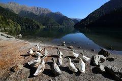 Lago alpino Ritsa en el Cáucaso foto de archivo libre de regalías