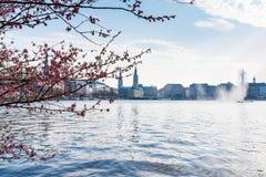 Lago Alster a Amburgo con Jungfernstieg e townhall nel fondo il giorno di molla soleggiato Fotografie Stock