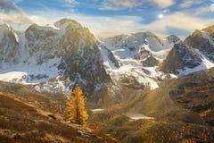 Lago amarelo colorido brilhante da montanha do outono, Rússia, Sibéria, montanhas de Altai, cume de Chuya fotografia de stock