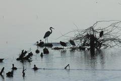 Lago ana Sagar em Ajmer Fotografia de Stock Royalty Free