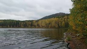 Lago Arakul na região de Chelyabinsk no dia do outono Folha colorida bonita das árvores e da reflexão na água video estoque