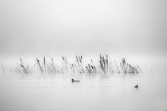 Lago ardiente 4 Fotografía de archivo libre de regalías