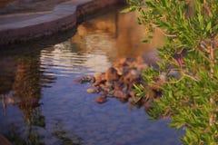 Lago artificial no hotel imagens de stock royalty free