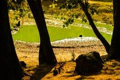 Lago asciutto nella foresta di estate Immagine Stock Libera da Diritti