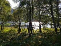 Lago através das árvores imagem de stock