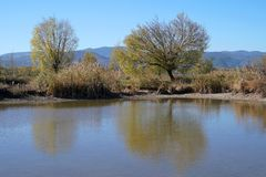 Lago in autunno con gli alberi Fotografia Stock Libera da Diritti