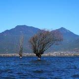 Lago in autunno con gli alberi dorati Immagine Stock