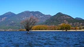 Lago in autunno con gli alberi dorati Immagini Stock Libere da Diritti