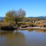 Lago in autunno con gli alberi dorati Immagini Stock
