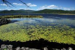 Lago azalea Imagem de Stock Royalty Free