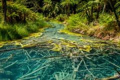 Lago azul claro en la secoya, Rotorua foto de archivo