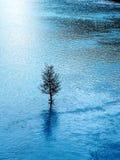 Lago azul e uma árvore Imagem de Stock Royalty Free