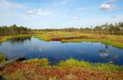 Lago báltico Estonia de la tundra Imágenes de archivo libres de regalías
