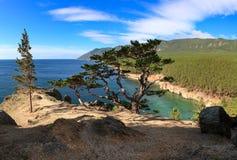 Lago Baikal Árbol en campo Fotografía de archivo libre de regalías