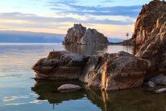 Lago Baikal Árvore no campo foto de stock royalty free