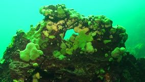 Lago Baikal subaquático filme