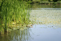 Lago bajo el cielo azul Foto de archivo