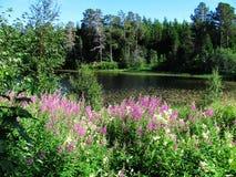 Lago Baklidammen Fotografía de archivo