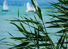Lago Balaton fotos de stock royalty free