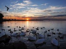 Lago Balaton en Hungría Fotos de archivo libres de regalías