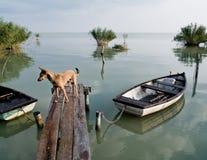 Lago Balaton (Szigliget) Imagens de Stock Royalty Free
