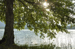 Lago banyoles Fotografía de archivo