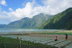 Lago Batur Fotografia de Stock