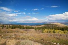 Lago bear Imagem de Stock Royalty Free