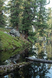 Lago bear Fotos de archivo libres de regalías