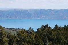 Lago bear Fotos de archivo