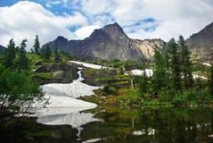 Lago bear Imagem de Stock