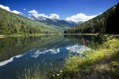 Lago bear foto de stock