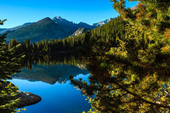 Lago bear Foto de Stock Royalty Free