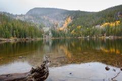 Lago bear en la caída Foto de archivo libre de regalías