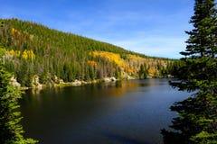Lago bear nella caduta Fotografia Stock Libera da Diritti