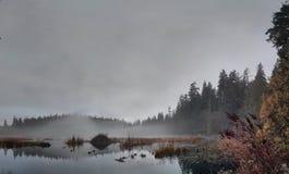 Lago beaver Fotografia Stock