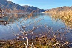 Lago Benmore, salgueiros & Raupo, Otago, Nova Zelândia Fotografia de Stock