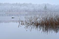 Lago Bijote, parco regionale di Kurtuvenai fotografie stock