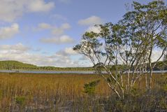 Lago Birrabeen Fotografie Stock
