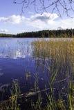 Lago blu della foresta Immagini Stock