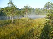 Lago blu nella foresta verde Fotografia Stock Libera da Diritti