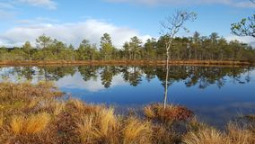Lago bog imagem de stock royalty free