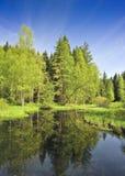 Lago bog foto de stock