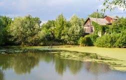 Lago bog em Kiev, Ucrânia fotografia de stock