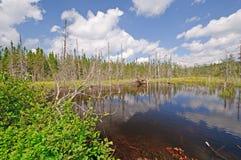 Lago bog na região selvagem Imagens de Stock Royalty Free