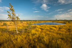 Lago bog no dia ensolarado imagem de stock